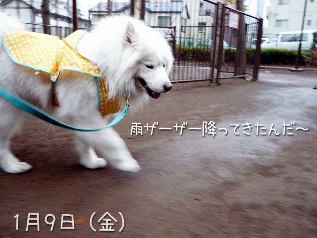 ザクザクお散歩_c0062832_20324766.jpg