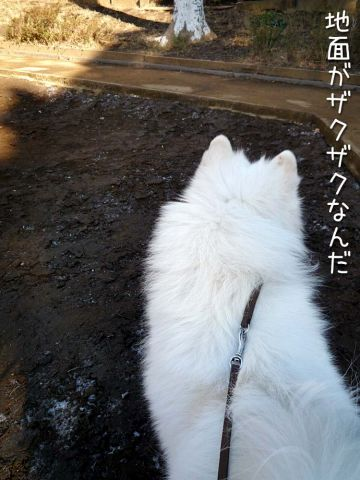 ザクザクお散歩_c0062832_20325564.jpg