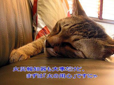 b0097848_115069.jpg
