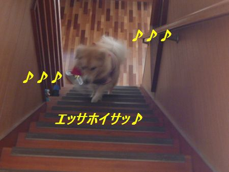 a0100160_2013378.jpg