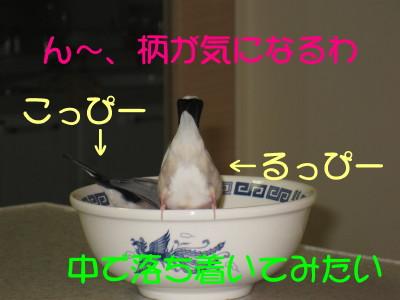 b0158061_2024304.jpg