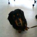 盲導犬_b0106766_18141267.jpg