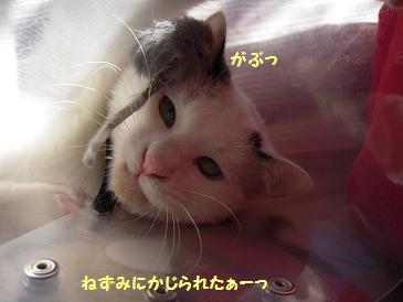 c0139488_1635421.jpg