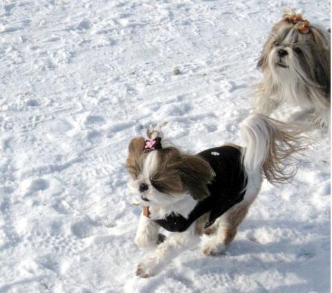 ソー公園は雪景色~♪_c0090198_5323827.jpg
