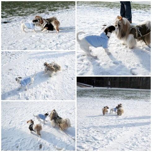 ソー公園は雪景色~♪_c0090198_5343854.jpg