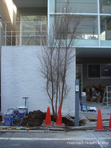 樹が入りました_f0039406_2023041.jpg