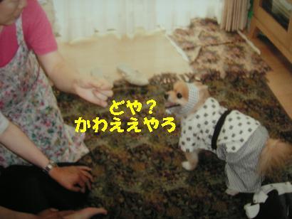 c0179136_205574.jpg