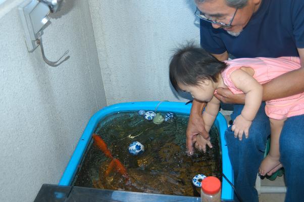 金魚とメダカ_c0180460_23552765.jpg