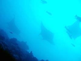 「海の中」を「観る」ものとしてダイバーとして、今すぐできることを!_a0043520_11154340.jpg
