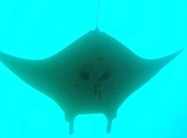 「海の中」を「観る」ものとしてダイバーとして、今すぐできることを!_a0043520_11175134.jpg