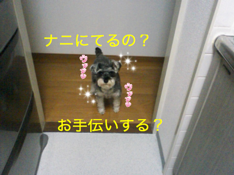 c0177261_1473592.jpg