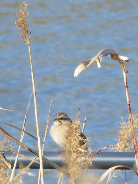 今日の鳥見_a0004863_17515298.jpg