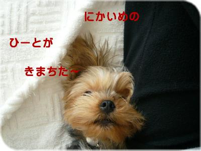 f0018384_1904986.jpg