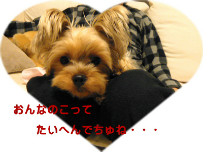 f0018384_1912368.jpg