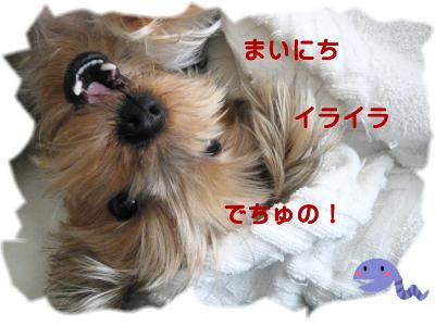 f0018384_19162.jpg