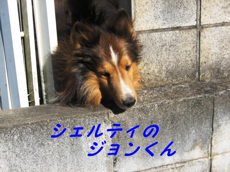 b0150088_91047.jpg