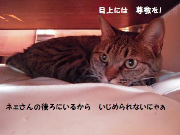 c0139488_1418315.jpg