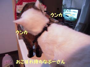 c0139488_1452505.jpg