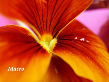 春を迎える花たち_d0144095_1516010.jpg