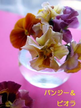 春を迎える花たち_d0144095_1575383.jpg