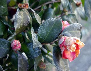 寒い朝_c0081499_1025629.jpg