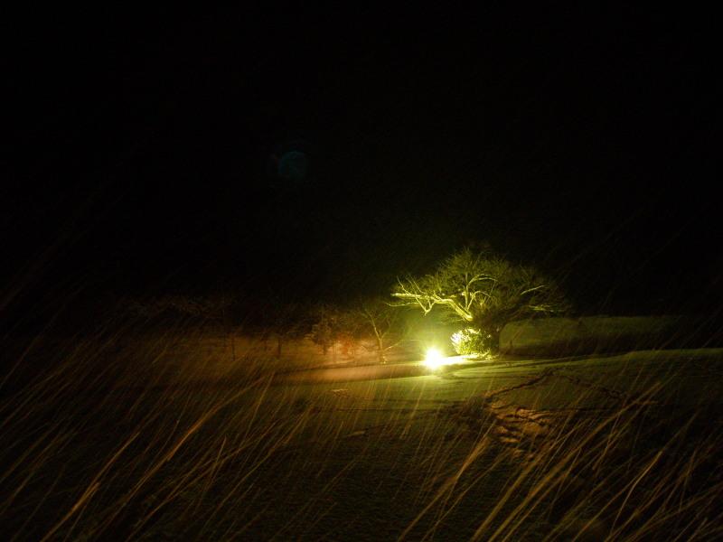 「冬の山桜」_c0105899_952745.jpg