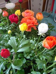 春の足音・・・_e0086738_137364.jpg