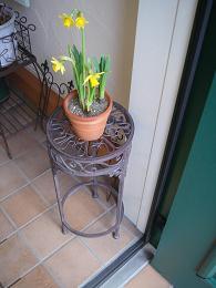 春の足音・・・_e0086738_1381247.jpg