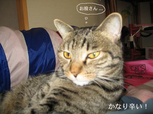 e0057361_20125935.jpg