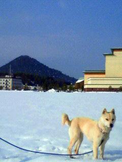 ミミさん風『私は山陰柴犬のスズです』_b0123467_1235559.jpg