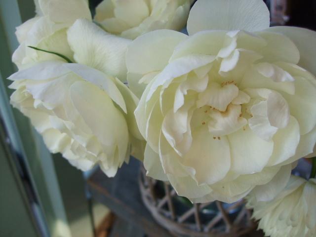 オークリーフ(冬の白い花)_f0049672_12111917.jpg