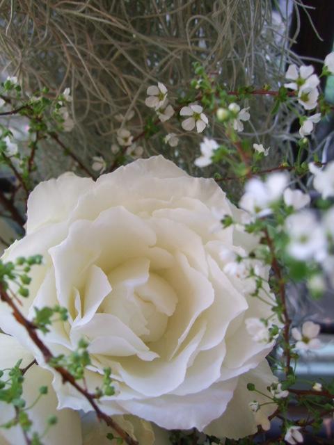 オークリーフ(冬の白い花)_f0049672_12122386.jpg