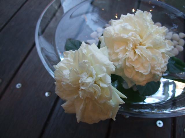 オークリーフ(冬の白い花)_f0049672_12123188.jpg