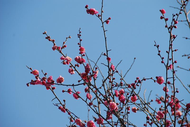 1月17日~ 小さな春探し_c0187781_14142136.jpg