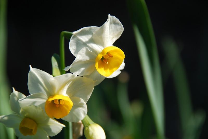 1月17日~ 小さな春探し_c0187781_14155072.jpg