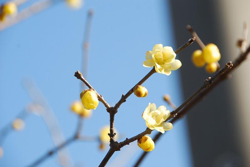 1月17日~ 小さな春探し_c0187781_1417530.jpg