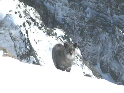 冬の浅間山の美しさ_e0120896_751258.jpg
