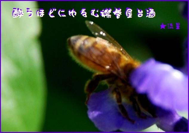 f0053297_902055.jpg