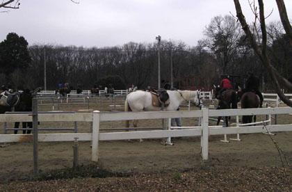 Le cheval _f0038600_19471011.jpg