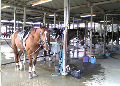 Le cheval _f0038600_19514025.jpg