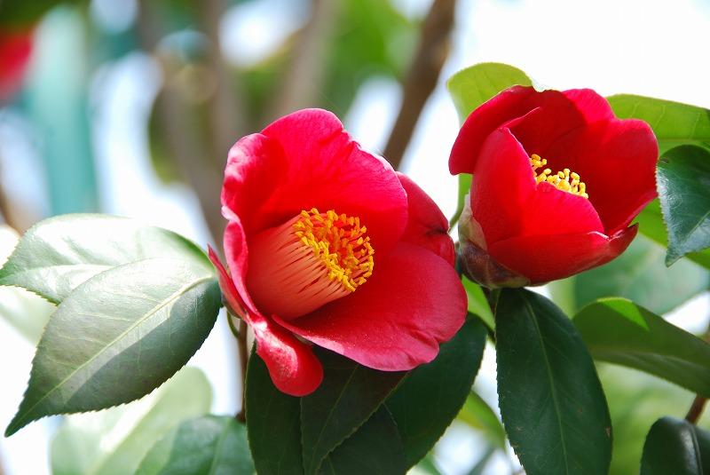 1月17日~ 小さな春探し_c0187781_19341641.jpg