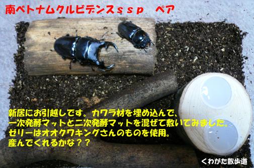 f0183484_20511420.jpg