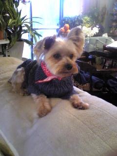 Sweaters for angels - 天使たちのセーター -_f0186787_22433463.jpg