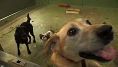 「犬と猫と人間と」_d0071596_22231972.jpg