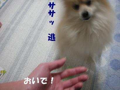 c0179136_3145986.jpg