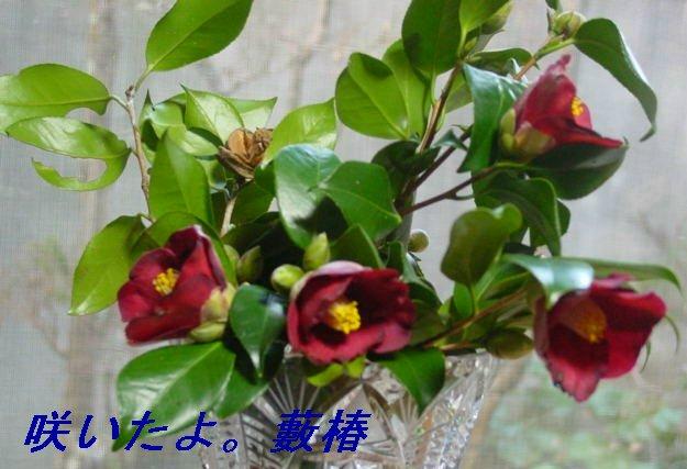 f0179357_16503429.jpg