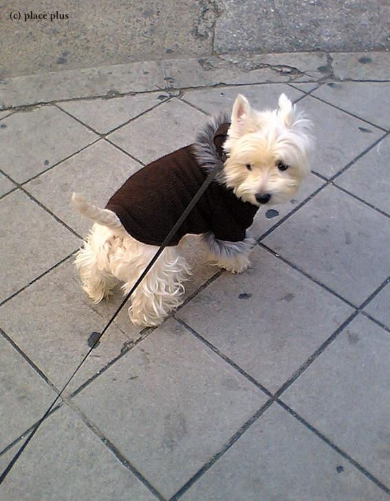 コートを着て近所のお散歩_b0107163_6503591.jpg