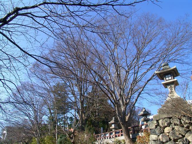 近江八幡_f0095094_0175383.jpg
