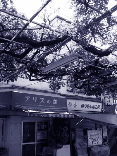 b0147419_195637.jpg
