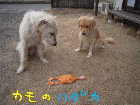 f0176830_2011897.jpg